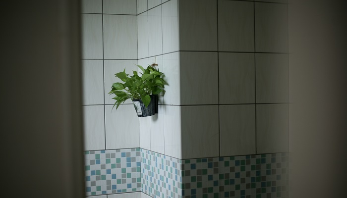 can i use peel and stick tiles in the shower